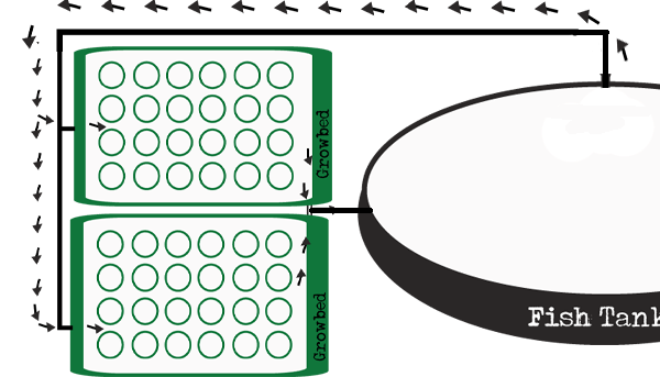 Aquaponic Diagram Plans