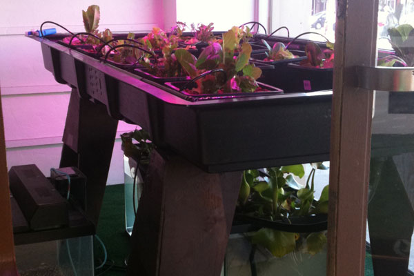 Aquaponic Window Display