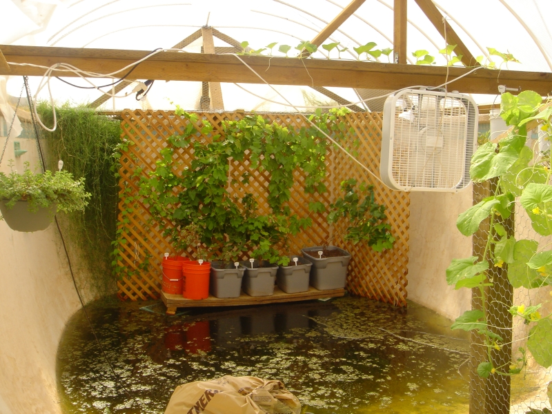 Garden pool aquaponics urban fish farmer for Garden pool aquaponics