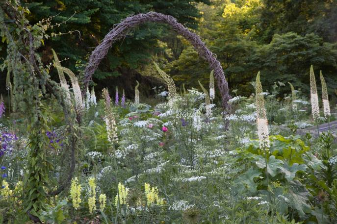 Eremurus, or Foxtail Lily, and billowy, white Ammi majus