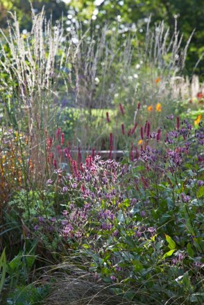 Tricyrtis formosana, Persicaria amplexicaulus 'Firetail' and the seedheads of Calamagrostis x acutiflora 'Karl Foerster'