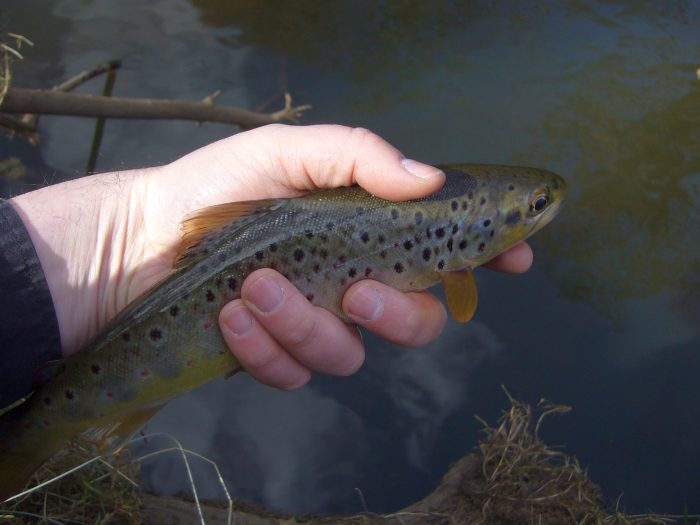 As usual photos do not do trout justice!