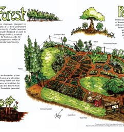 food forest conceptual diagram by full circle tree crops urban diagram of forest floor diagram of forest [ 3080 x 2053 Pixel ]