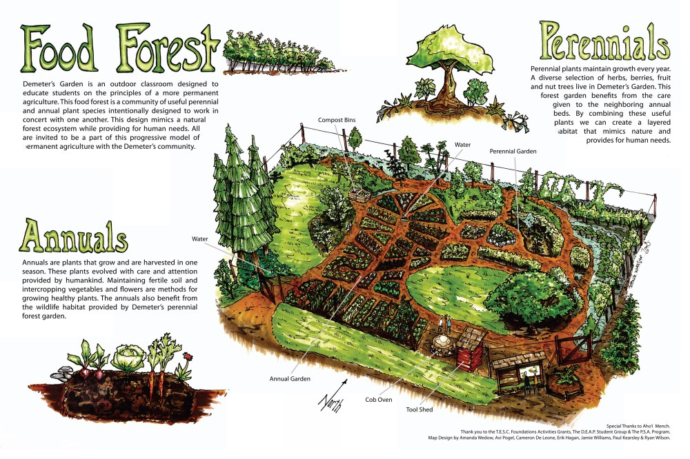 medium resolution of food forest conceptual diagram by full circle tree crops urban diagram of forest floor diagram of forest