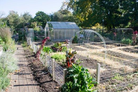 Urban_Farm