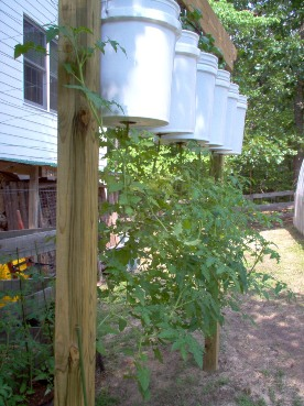 Urban Garden Casual Upside Down Tomatoes
