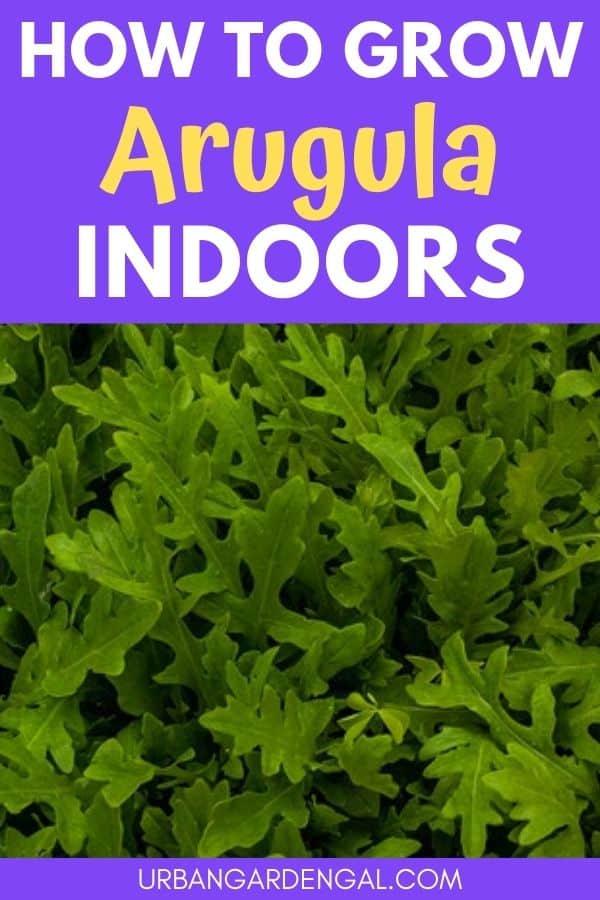 How to Grow Arugula Indoors | Urban Cultivator - YouTube