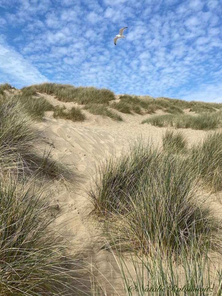 Camber Sands 2