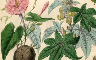 Food, Culture, Spirit: The Art of Growing Food as Medicine (Full Moon Edition)