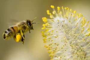 bee-pollen-supplements-featured-image