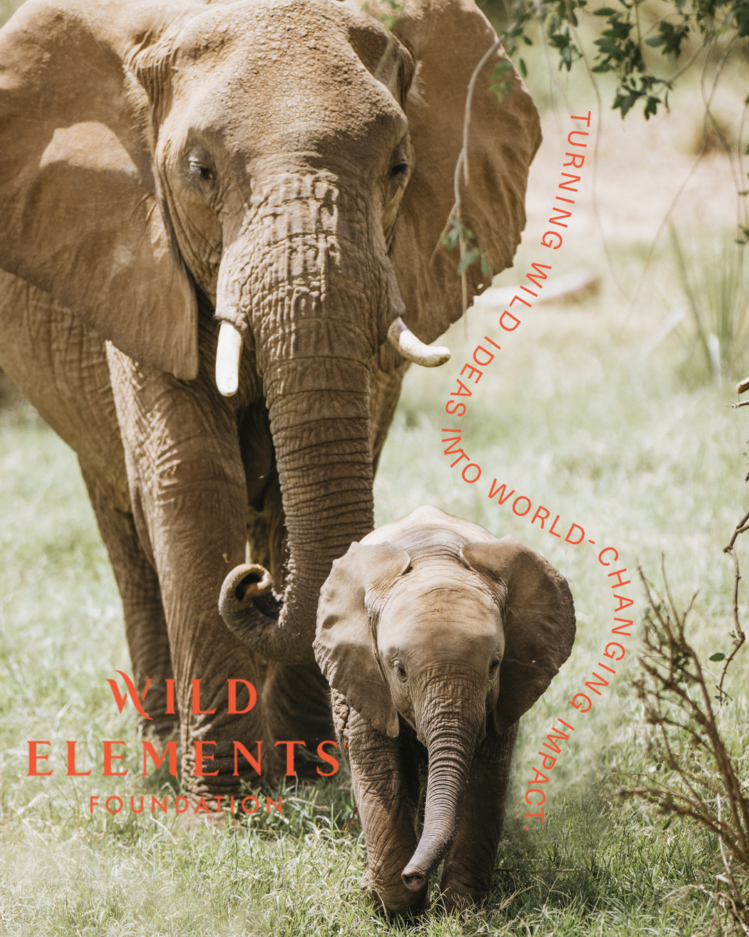 Press Release: WILD ELEMENTS Foundation Launches With Unprecedented Approach to Investing in Women Conservation Leaders