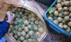 Sep 2010 in N19: street pear harvest