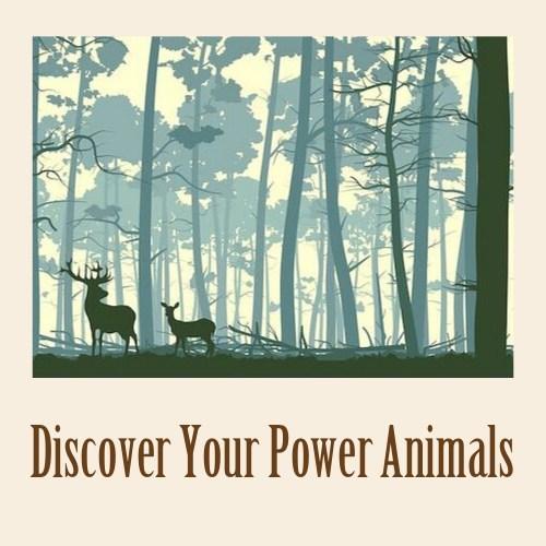 Spirit Animal Card Readings