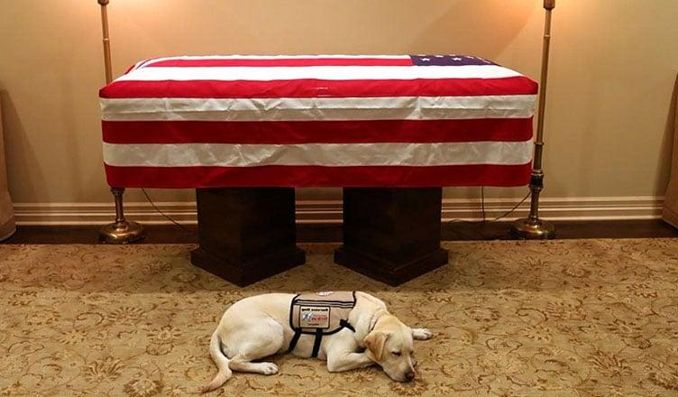 Bush's Dog Sully (Twitter)