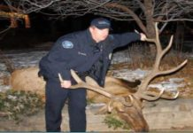 Cop Gets Felony for Killing an Elk, But No Trial for Killing Unarmed, Black Men?