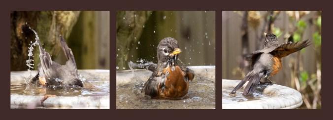 Bath-time fun for baby robin.