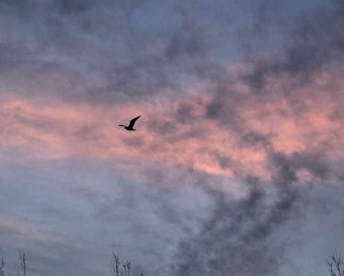 Dawn bird
