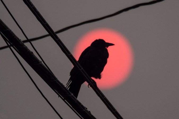 Mr P against red sun