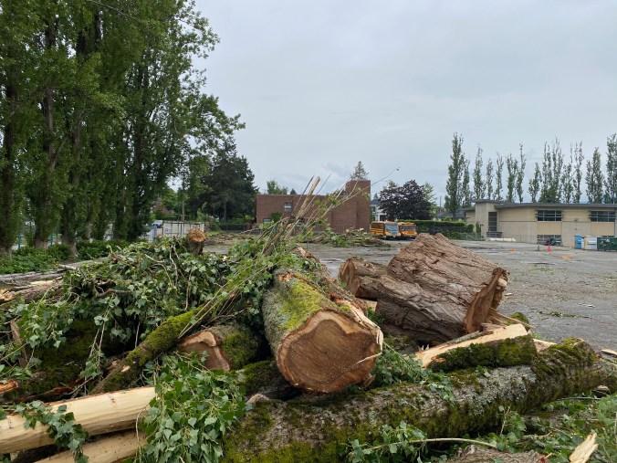 Fallen Poplars, June 12