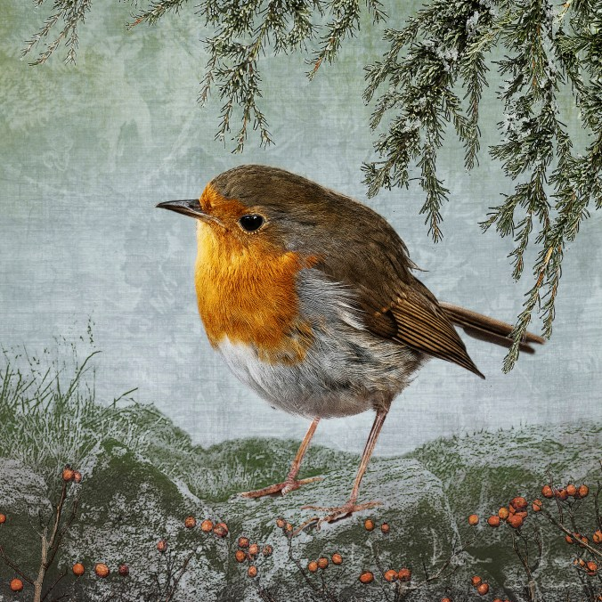 Welsh robin and stone wall photo collage by June Hunter