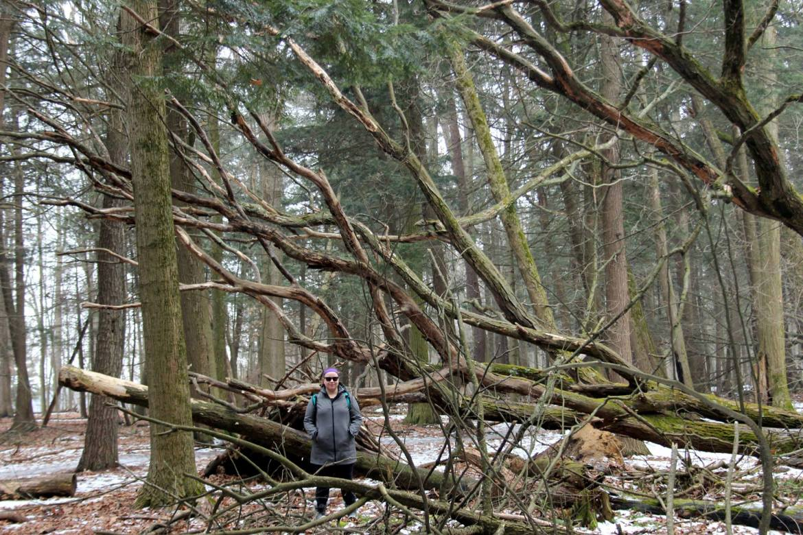 Standing next to fallen trees on the Rouge Urban National Park's Mast Trail