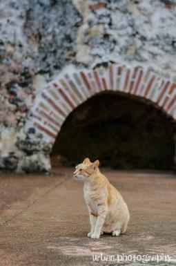 Morry, protector of El Morro