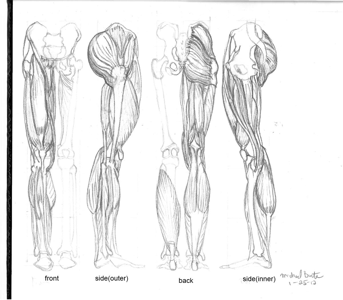 Drawing The Leg Bones And Muscles Revisited Iv