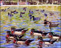 B Jocelyne Bouchard, L'heure de pointe du Lac aux castors
