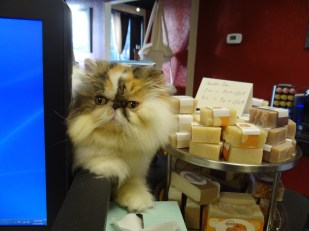 fuzzy cat next to handmade soaps