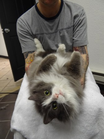 cat being pampered