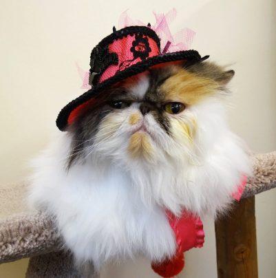 cat groomed for halloween