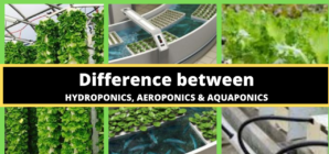 Vertical Farming: Which System is Best?