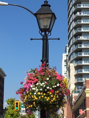 newwest-lampost-hanging-baskets