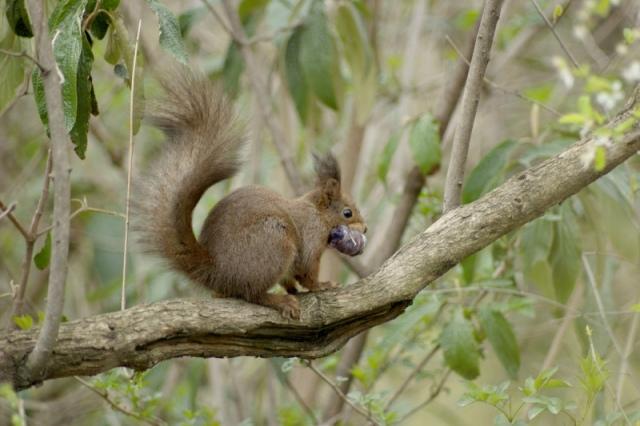 squirrel-ii-640.jpg