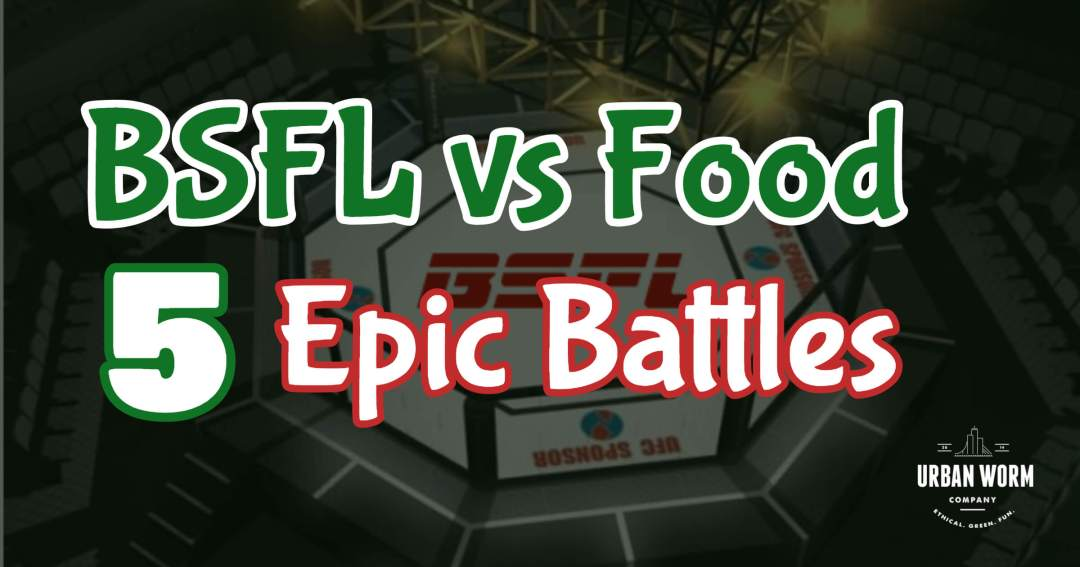 Video: 5 Epic Battles Between Black Soldier Fly Larvae and Food