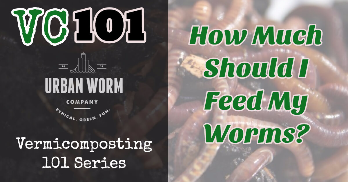 Vermicomposting 101: How Much Should I Feed My Worms?