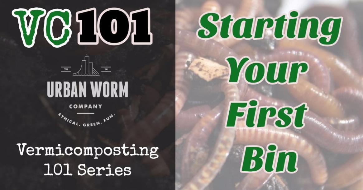 starting-a-worm-bin