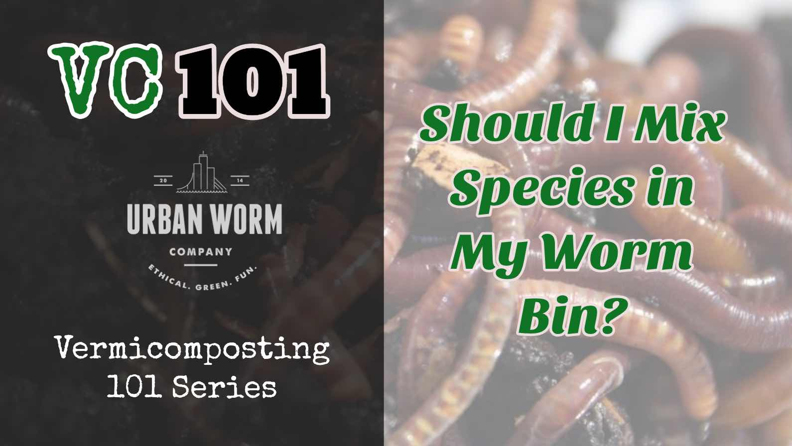 Vermicomposting 101: Should I Mix Worm Species in My Worm Bin?