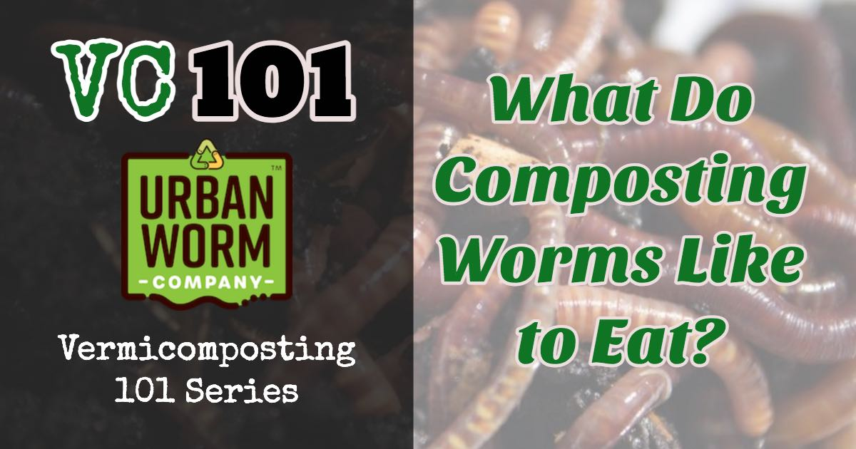 What Do Worms Eat? A Road Map for What To Feed Your Worms
