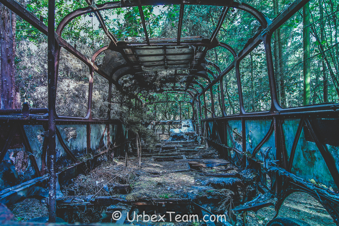 Jungle Bus 3