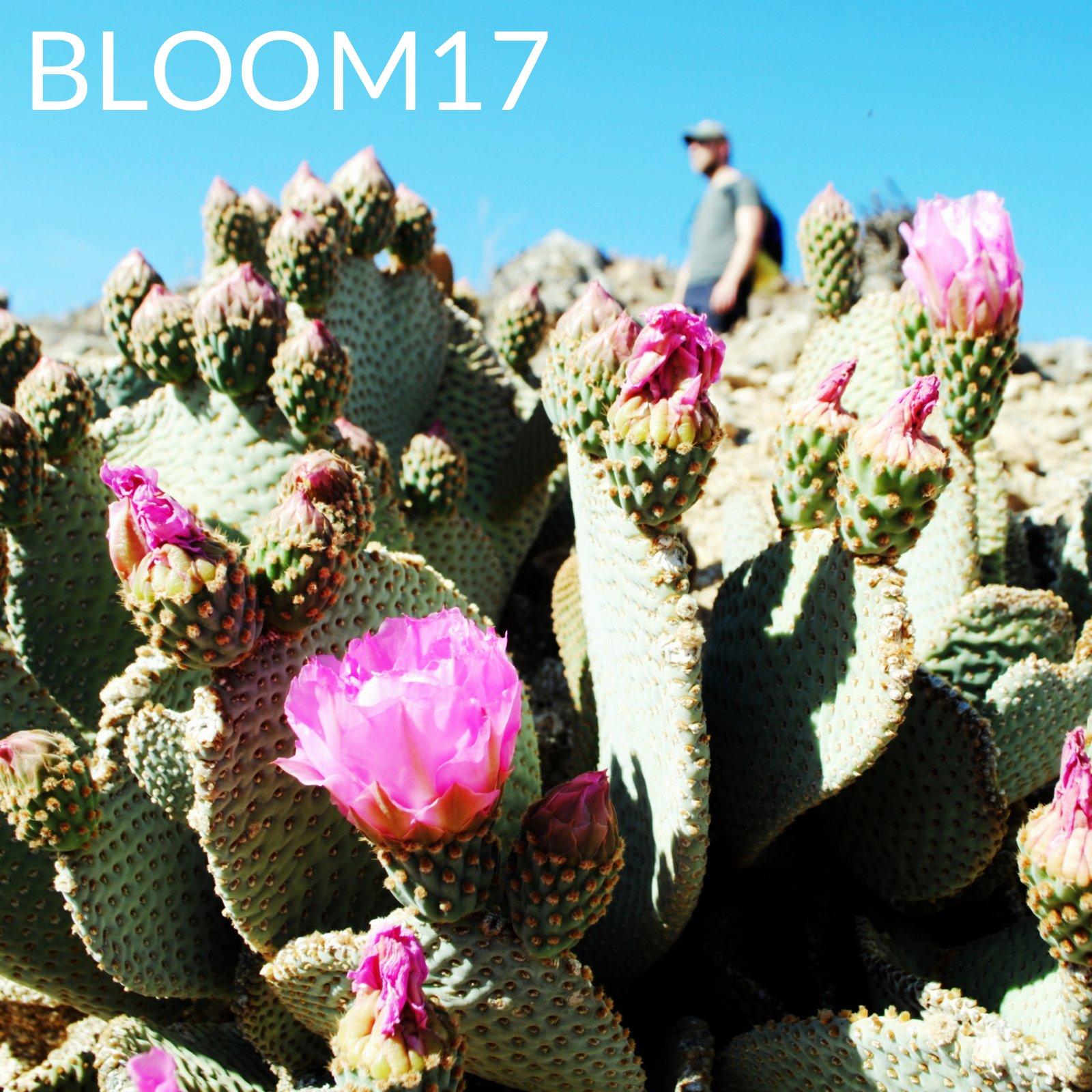 soundcloud, playlist, spring, music, cactus