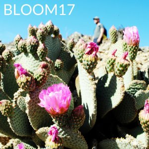 soundcloud, playlist, spring, music, cactus