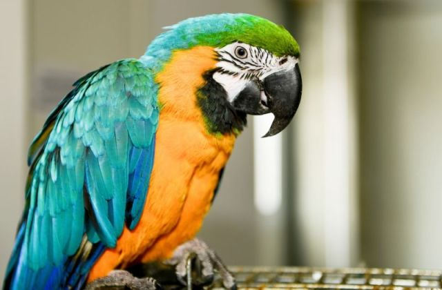 Parrot tips off police