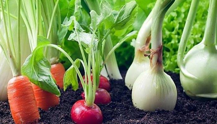 گھریلو سطح پر سبزیوں کی کاشت
