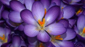 Flower - Purple - Updated