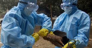 یوپی برڈ فلوسے'کنٹرول ائیریا'قرار،زندہ چڑیوں کی ٹرانسپورٹ پر پابندی