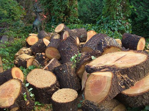 وائلڈ لائف کنزرویشن سوسائٹی کی غلط پالسیوں نے تحفظ جنگلات کا قدیم نظام تباہ کر دیا، گوہر آباد کے عمائدین کی دہائی