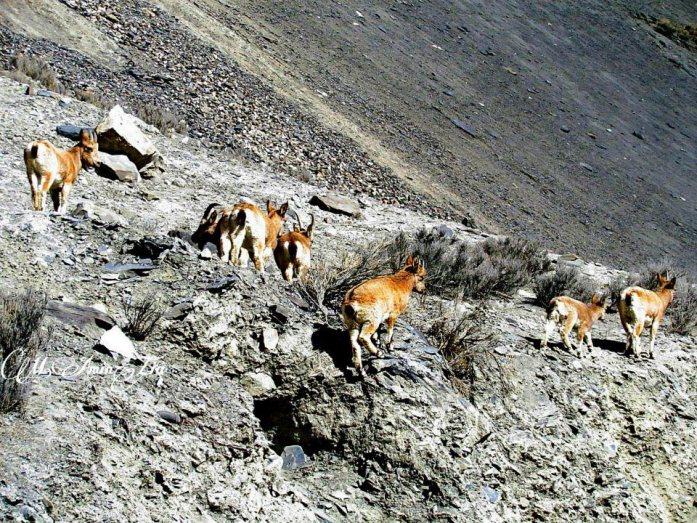 نایاب جانوروں کی نسلوں کو غیر قانونی شکار سے خطرہ لاحق ہے. تصویر: محمد امین ضیاء