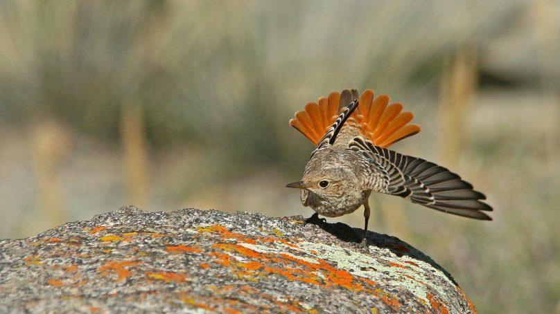 گلگت بلتستان کی حسین وادیوں میں بسنے والے نو (9) دلکش پرندوں کی تصویریں