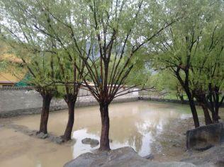 Gilgit city (4)